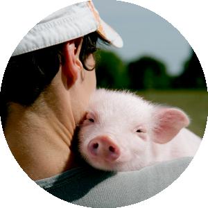 La agricultura Ecológica fomenta el bienestar animal